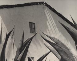 Photo by Manuel Alvarez Bravo, Ventana a los Magueyes, Mexico; UC Riverside California Museum of Photography